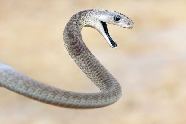 The top 10 deadliest snakes in the world